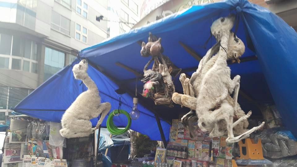 La Paz Cadılar Pazarındaki Lama Fetüsleri