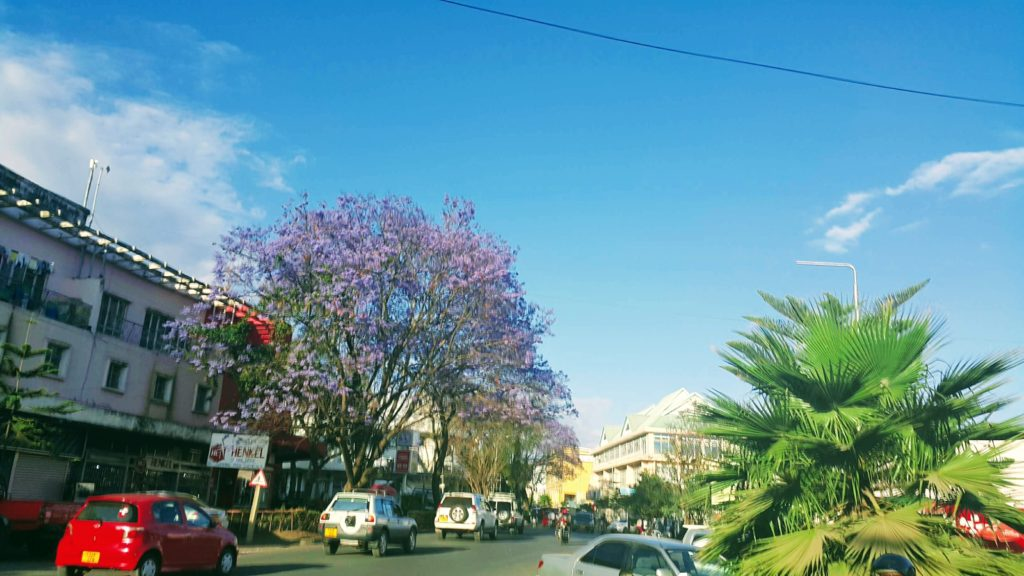 Arusha Şehir Merkezi