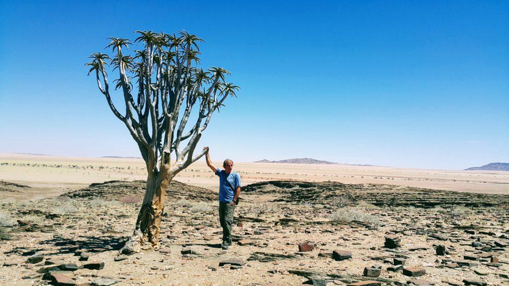 Her Şeye Rağmen Direnen Bir Ağaç